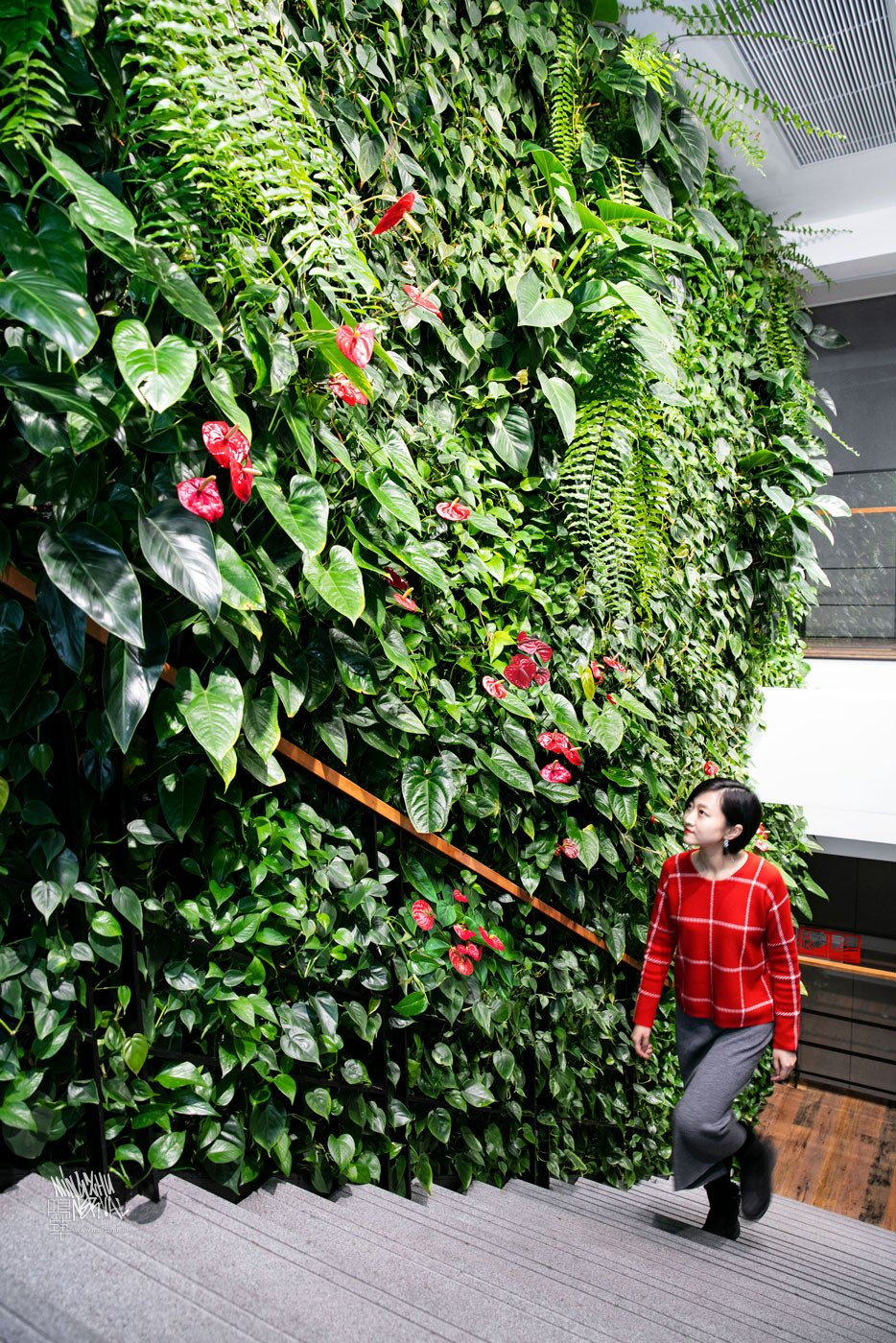 Mingzhu Nerval vertical living wall experts created a healthy nature workspace at JLL in Shanghai, 2017