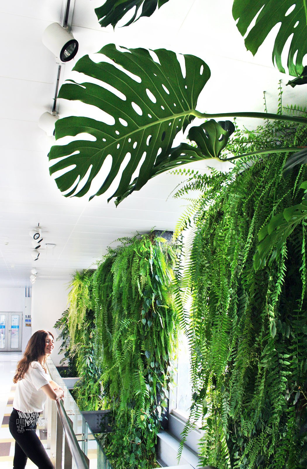 Mingzhu Nerval vertical living wall experts created a healthy nature workspace at Rhodia Solvay in Shanghai, 2013