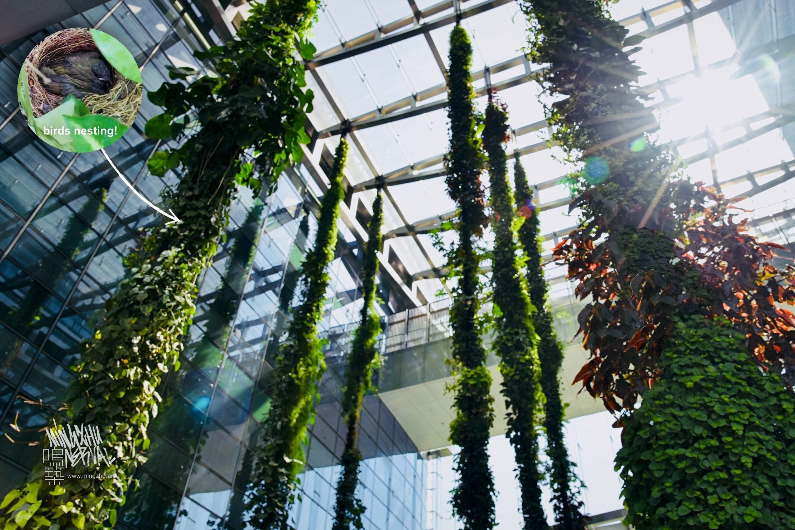 Mingzhu Nerval, living walls experts designed a liana garden at the SCC Tower in Shenzhen, 2016