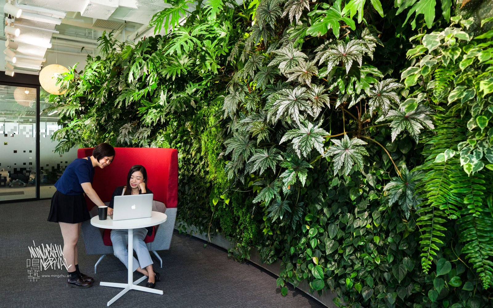 At Mingzhu Nerval, we thrive at creating the most beautiful vertical gardens in the world. For Google, we created a rainforest living wall design - Beijing, 2016.
