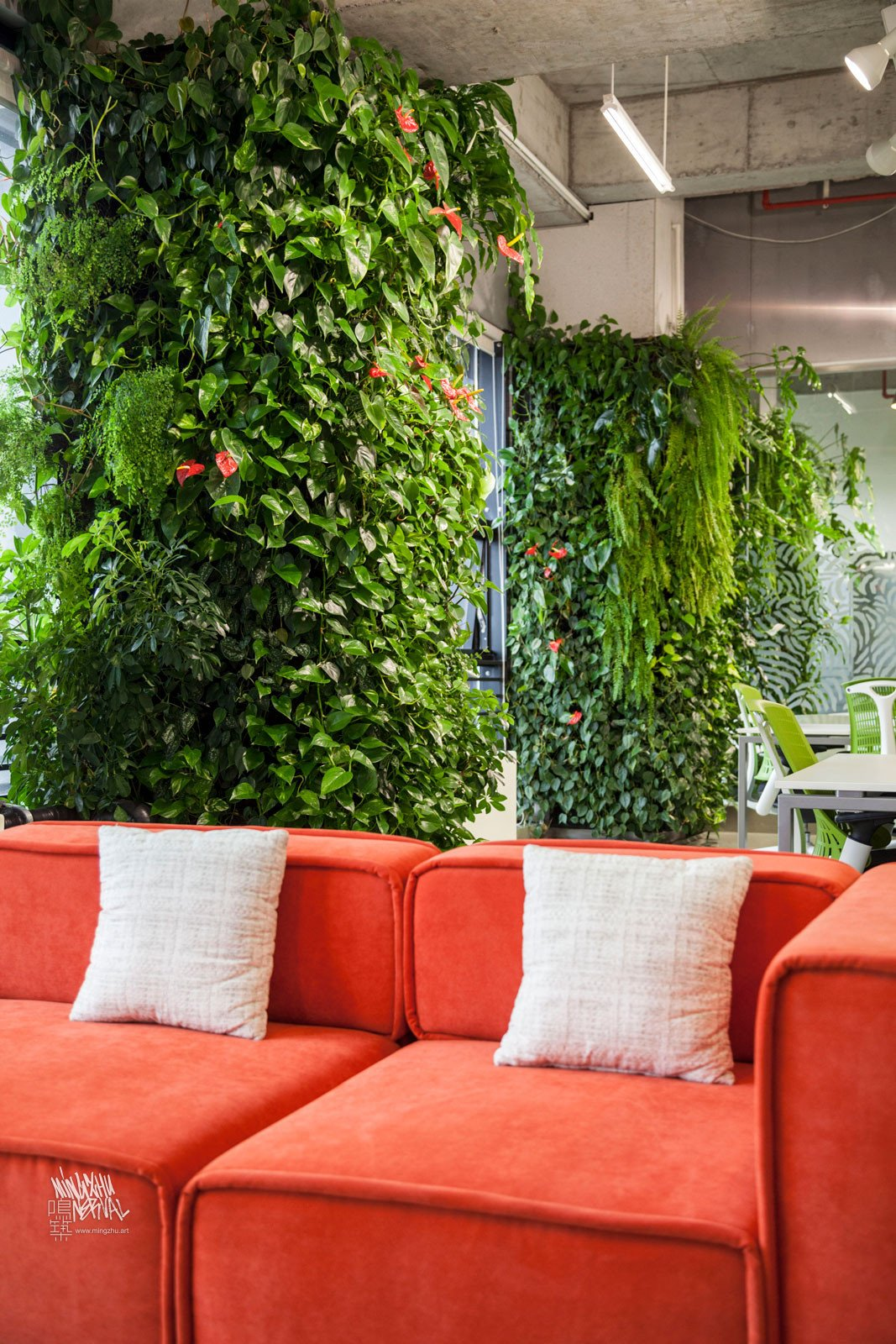 Mingzhu Nerval vertical living wall experts created the healthy nature workspace for the Dawnfinder offices in Shanghai, 2012