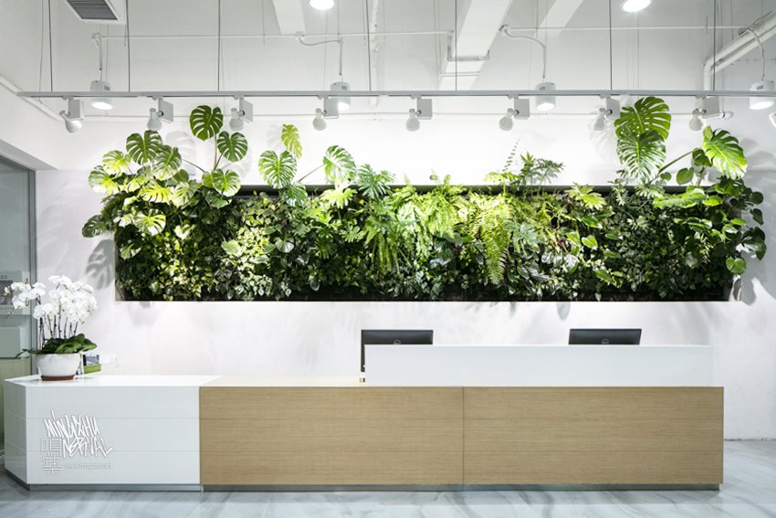 Mingzhu Nerval vertical living wall experts created a healthy nature workspace at AkzoNobel in Shanghai, 2019