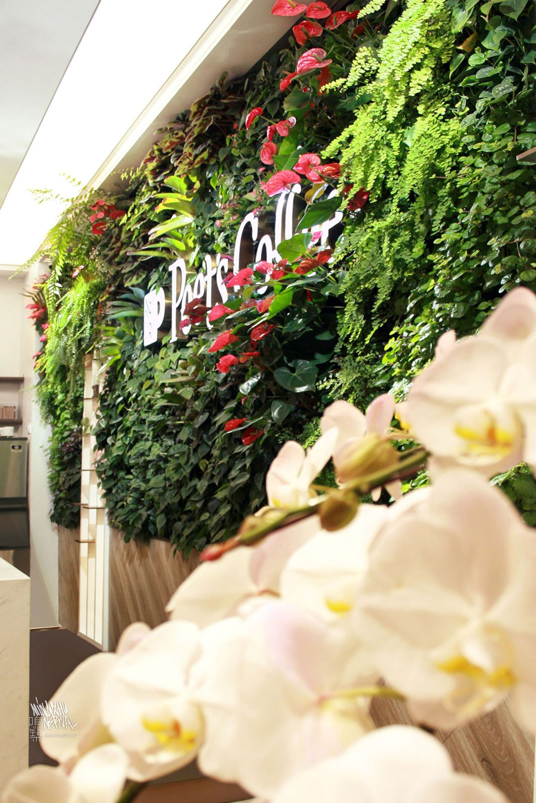 Mingzhu Nerval vertical living wall experts created a vertical living green wall for Peet's Coffee in Shanghai, 2019