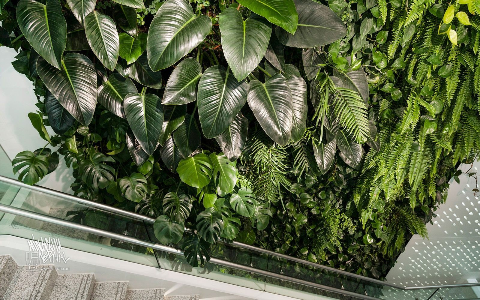 At Mingzhu Nerval, we thrive at creating the most beautiful vertical gardens in the world. For Nu Skin, we created an awesome living wall design - Shanghai, 2013.